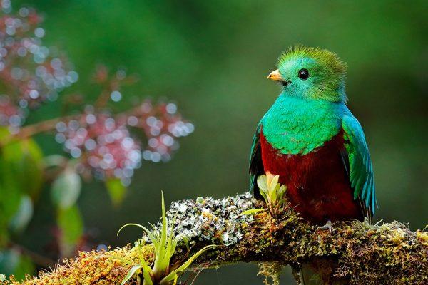 Lac Atitlan (Nez de l'indien) / Iximche / Réserve du Quetzal