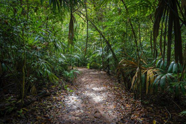 Voyage Mystère «Les Secrets Mayas»
